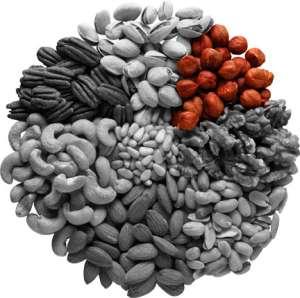 Орехи на все случаи жизни