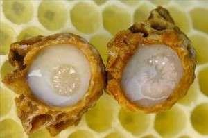 Пчелиное маточное молочко - Применение
